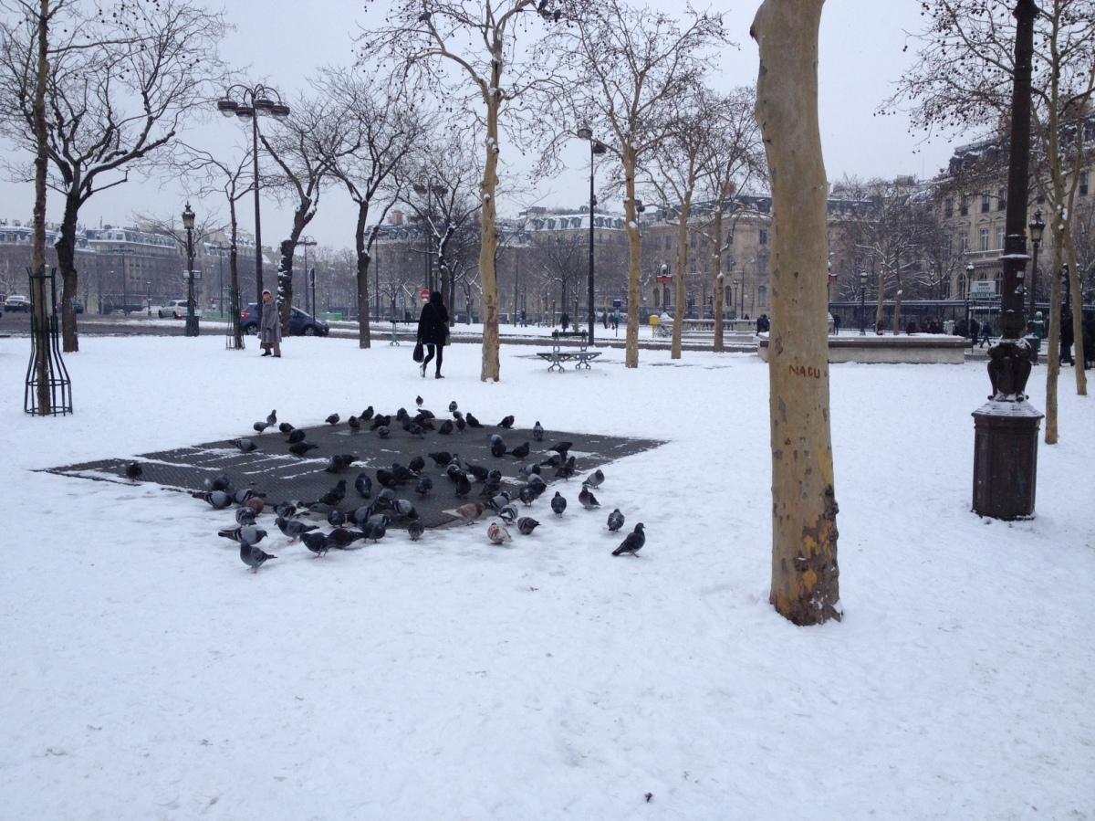 neve piccioni